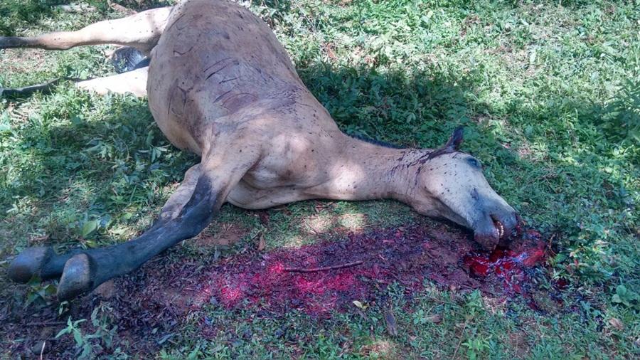Égua é morta a pauladas em Catanduvas