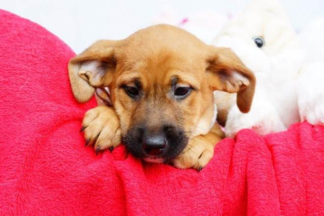 ONG em Florianópolis (SC) promove evento de adoção de cães em shopping neste sábado