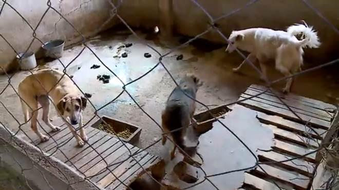 Cães são mantidos em estado precário em canil municipal de Orleans, SC
