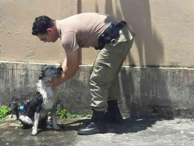 Policiais militares de Joinville (SC) resgatam cão desmaiado devido ao calor de 48º