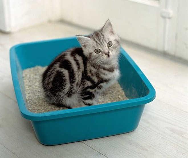 Saiba o que fazer se o gato não usa a caixa de areia