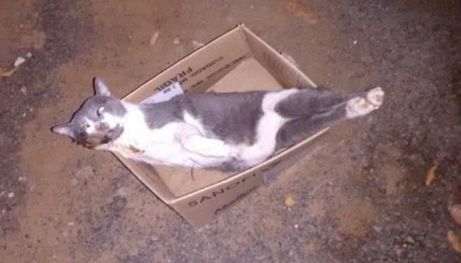 Onda de envenenamento de gatos assusta tutores em Adamantina, SP