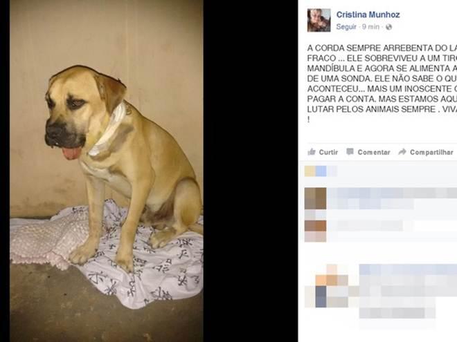 Cachorro é baleado na boca durante ação policial em Buritama, SP