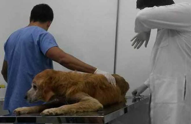 Cão é resgatado em estado crítico em Campinas, SP