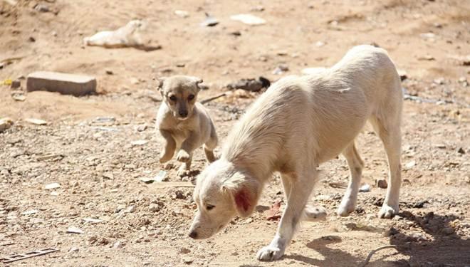 Prefeitura de Carapicuíba (SP) esclarece polêmica sobre sacrifício de animais