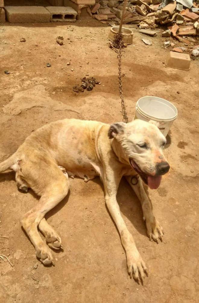 Cães com sinais de maus-tratos são resgatados pela GCM em Embu das Artes, SP