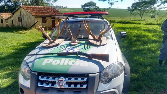 Polícia ambiental apreende chifres de veados-campeiros feitos de troféus, em Herculândia, SP