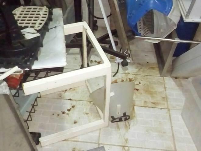 Cães mortos são achados dentro de clínica veterinária no interior de SP