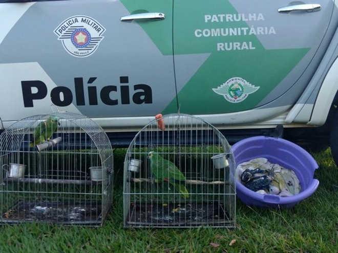 Aves sob maus-tratos são resgatadas de cativeiro em Euclides da Cunha Paulista, SP