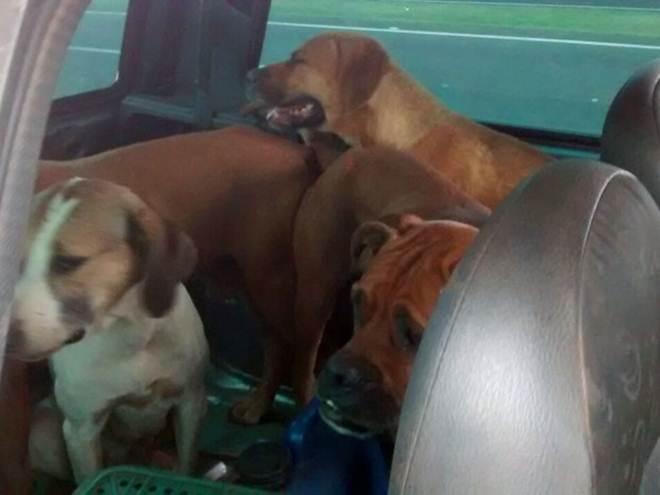 Caçador é multado em R$ 18 mil ao transportar seis cães em porta-malas em Rancharia, SP