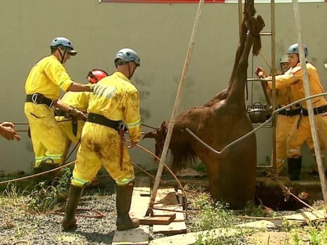 Operação para resgatar égua mobiliza bombeiros por 4h30 em Ribeirão Preto, SP