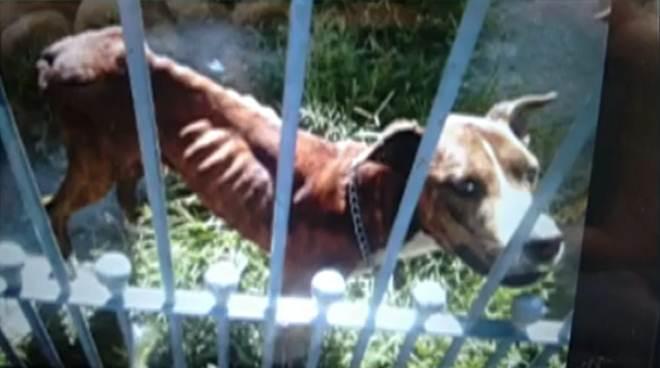 Mulher é multada em R$ 9 mil por maus-tratos a cães em Suzano, SP