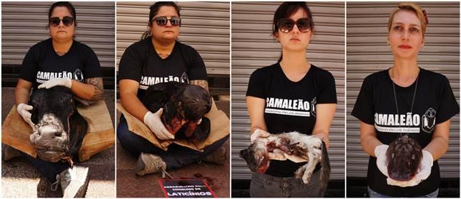 ONG leva animais vítimas do Especismo para ato em Luto em Taubaté, SP