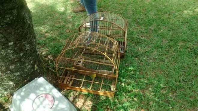 Polícia prende três homens por maus-tratos a animais em Valinhos, SP