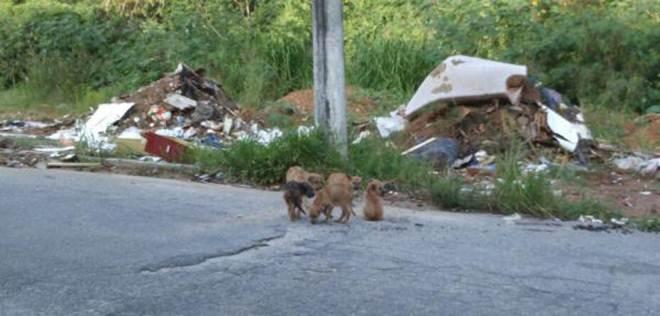 Cinco cachorros foram abandonados no Parque Jataí, em Votorantim, SP