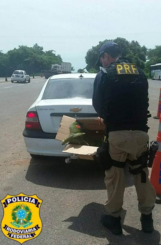 PRF flagra transporte ilegal de animais silvestres em Paraíso do Tocantins, TO