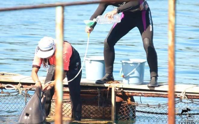 Hidratados através de sondas e alimentados com peixes com medicamentos