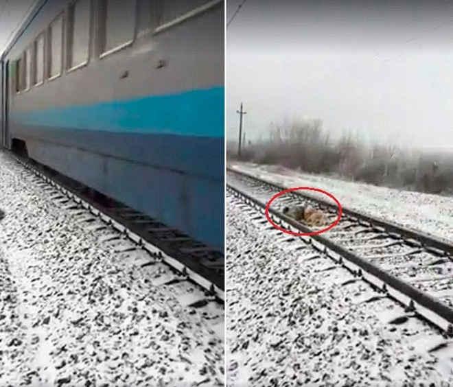 Cão se junta à 'namorada' ferida em linha férrea e a protege de trens por dois dias