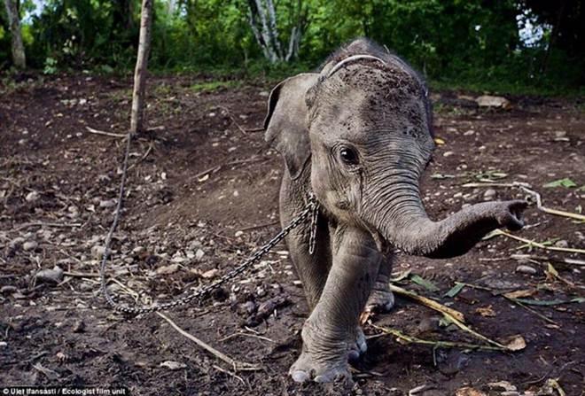 Esta única foto revela o trágico destino dos elefantes cativos