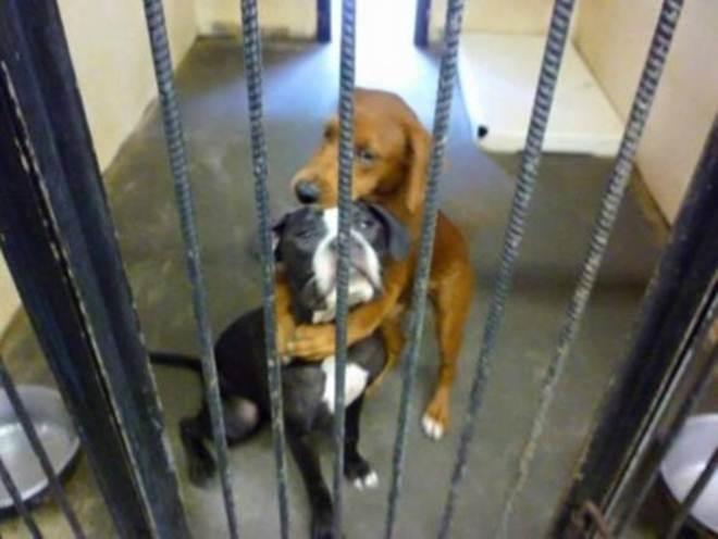 Veja como estão as cadelas resgatadas momentos antes do abate