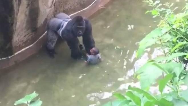 Zoológicos foram palco de tragédias com humanos e animais ao longo do ano