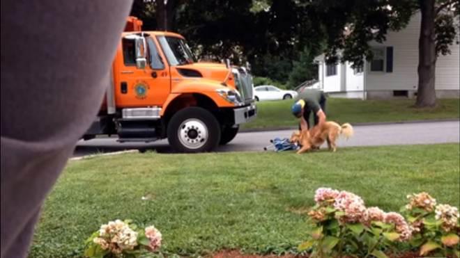 Amizade entre cadela e lixeiro emociona a web