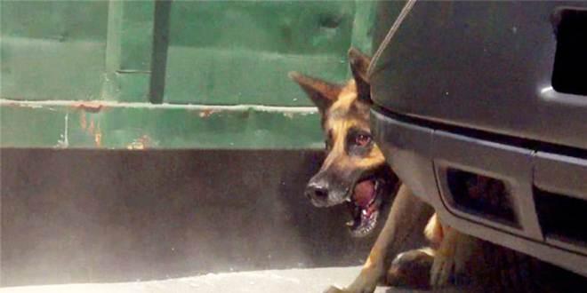 Após muito relutar, cachorro é tirado das ruas e ganha uma segunda chance para ser feliz