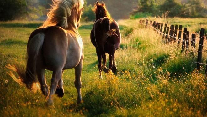 Conheça o campo onde os cavalos maltratados recuperam sua liberdade em Rosário, Argentina