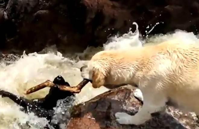 Cachorro 'herói' salva vida de outro e atitude viraliza na web