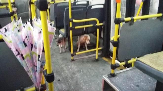 Motorista de ônibus 'dá carona' para cães assustados durante temporal