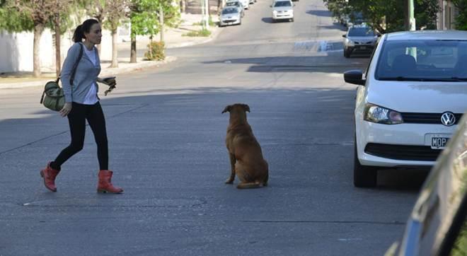 Polêmica na Argentina: querem multar quem alimentar cães de rua