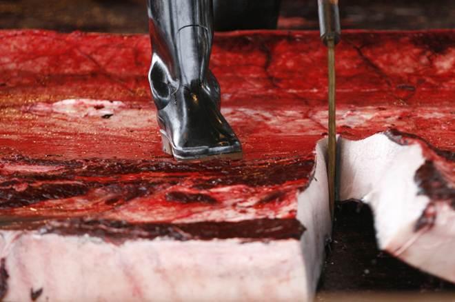 Austrália condena Japão por caça de baleias no Oceano Antártico