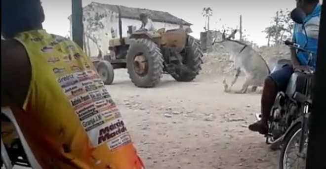 Idoso é indiciado por maus-tratos após arrastar jumento com trator na Bahia