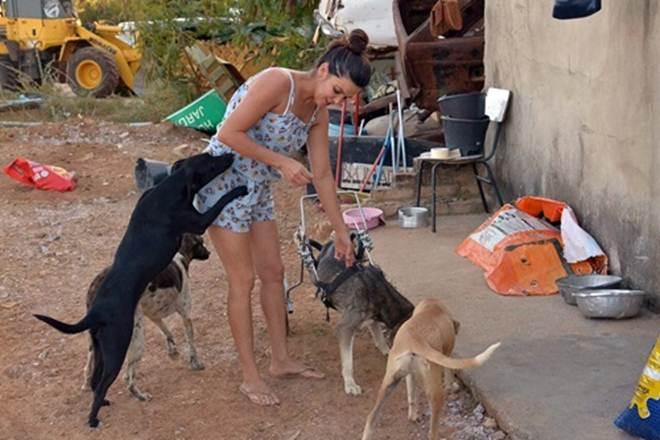 ONG enfrenta sérios desafios para cuidar de animais atropelados ou vítimas de maus-tratos em Brumado, BA