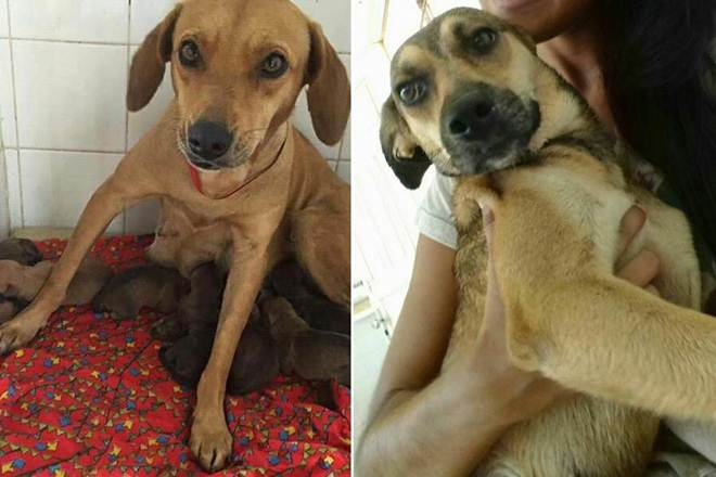Cadelas são sequestradas em Centro de Proteção de Animais em Jacobina, BA