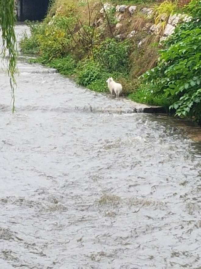 Taxista salva a vida de cachorro empurrado dentro de rio
