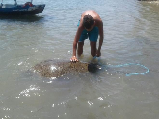 Pescadores resgatam tartaruga de 2 metros na Praia Águas Belas, no CE
