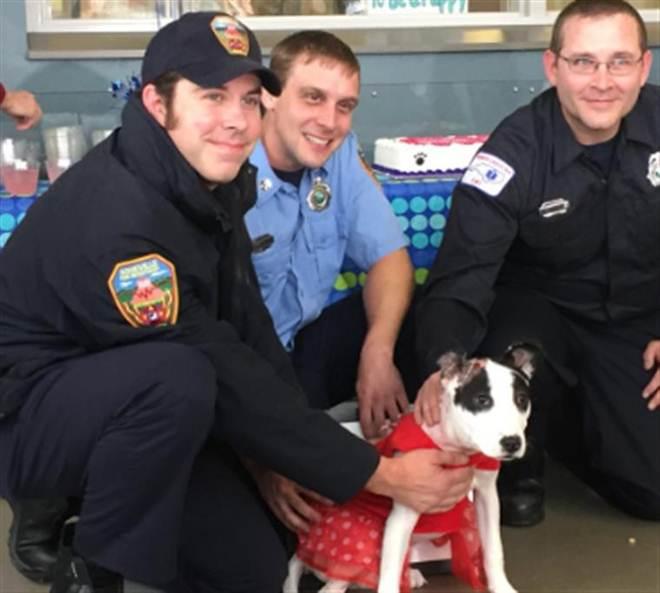 Cadela reencontra bombeiros que a salvaram; vídeo