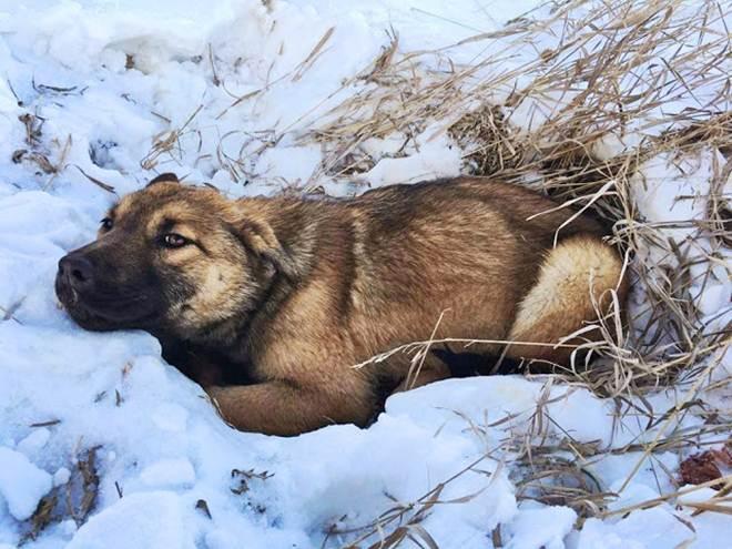 Cadela atropelada por um carro espera 12 horas para ser resgatada em Alberta, Canadá