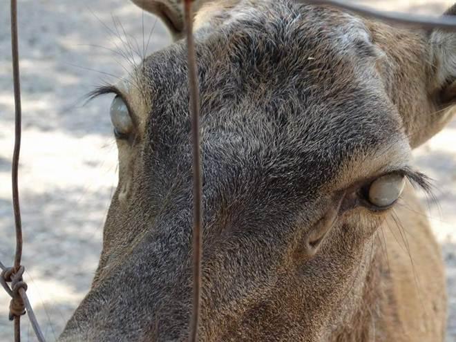 O parque marinho Marineland está encrencado por maltratar seus animais – novamente