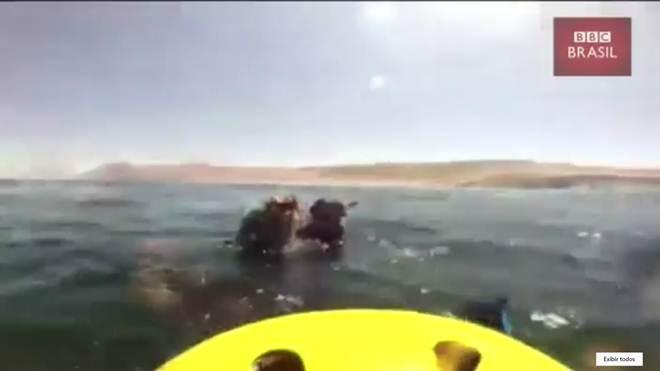 Família chilena resgata baleia-jubarte de rede de pesca