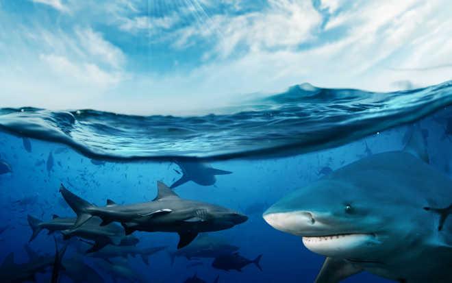 Principal companhia aérea chinesa proíbe a carga de barbatanas de tubarão