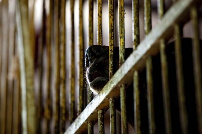 Polícia chinesa detém homem que armazenava carne de espécies protegidas