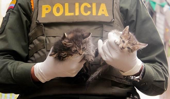 Mais de 80 milhões de pesos serão investidos em proteção animal em Bogotá, Colômbia