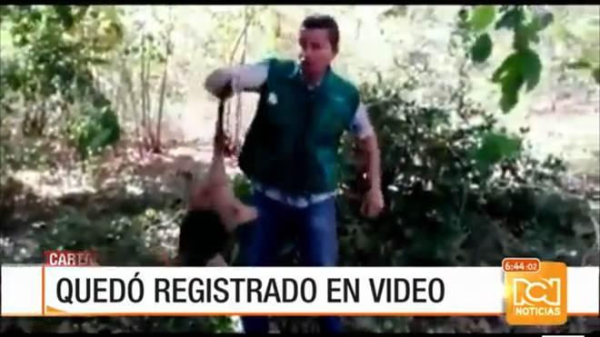 Vídeo registra supostos maus-tratos contra bicho-preguiça na Colômbia