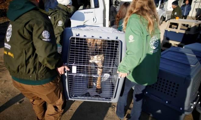 Criados para serem vendidos como carne, cães são resgatados na Ásia