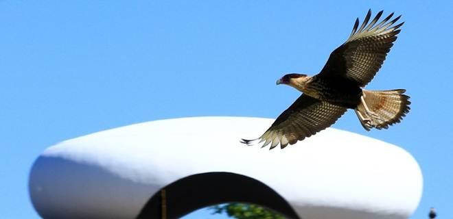 GDF questionará lei que limita fiscalização a criadores de pássaros