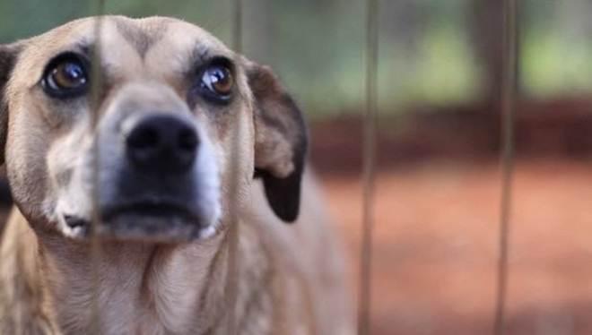 CFMV abre consulta pública para resolução sobre maus-tratos e crueldade