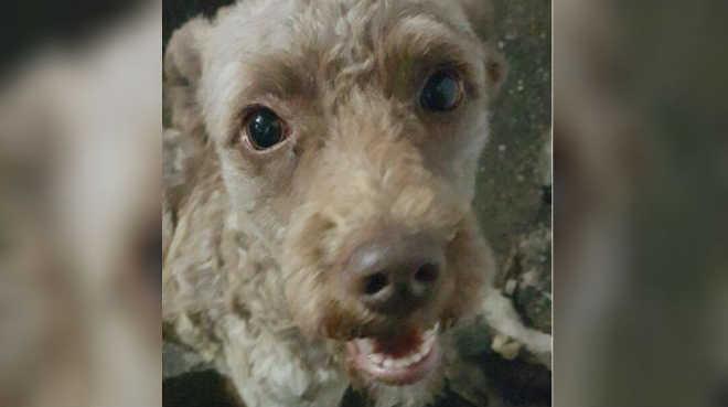 Após dois anos, cachorro e tutora se reencontram no Recanto das Emas, DF