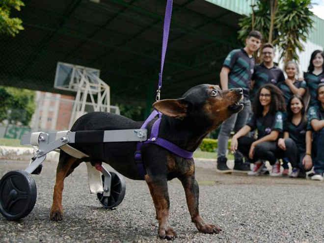 Estudantes do DF constroem próteses gratuitas para animais